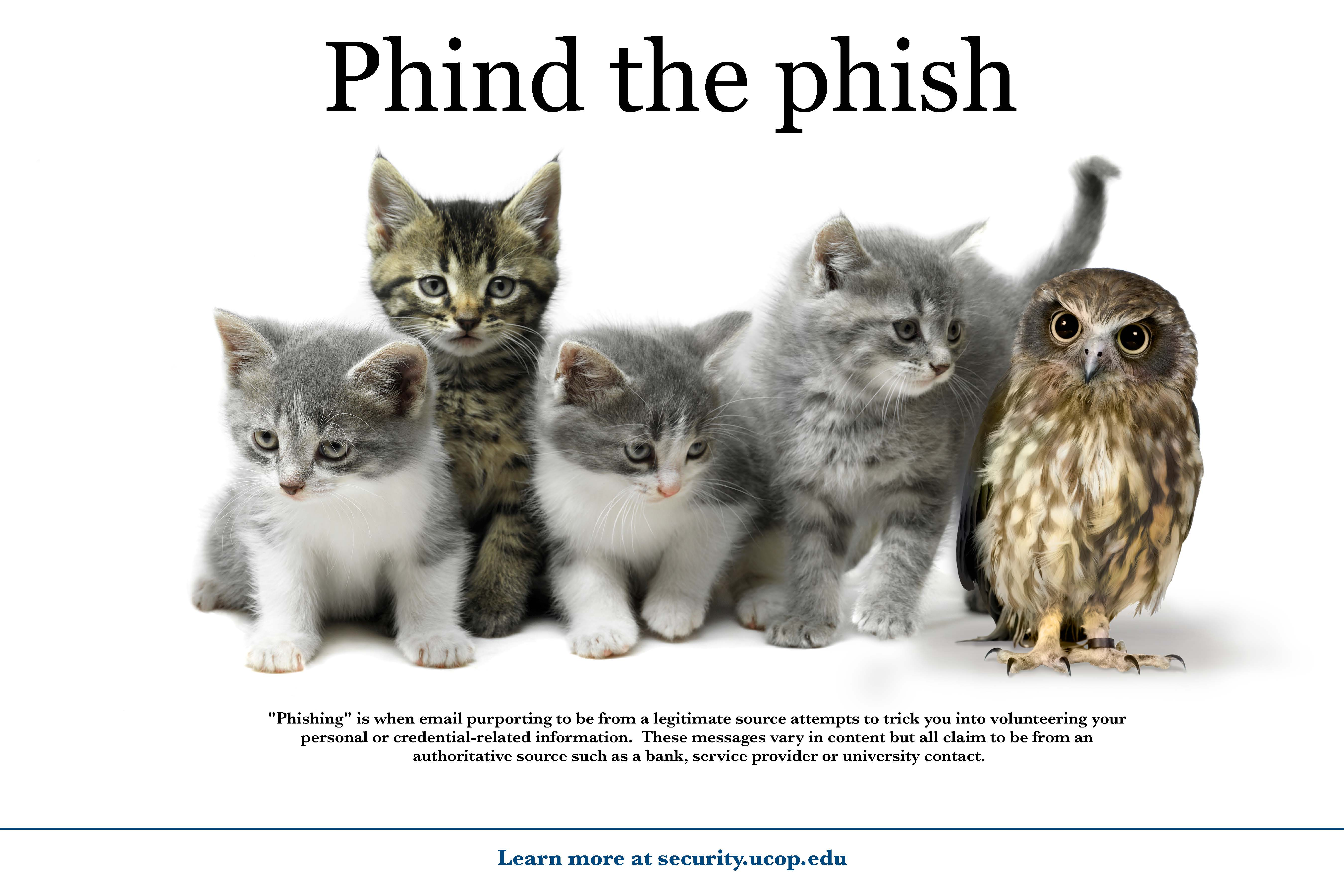 Flyer: Phind the phish. - Kitten Owl