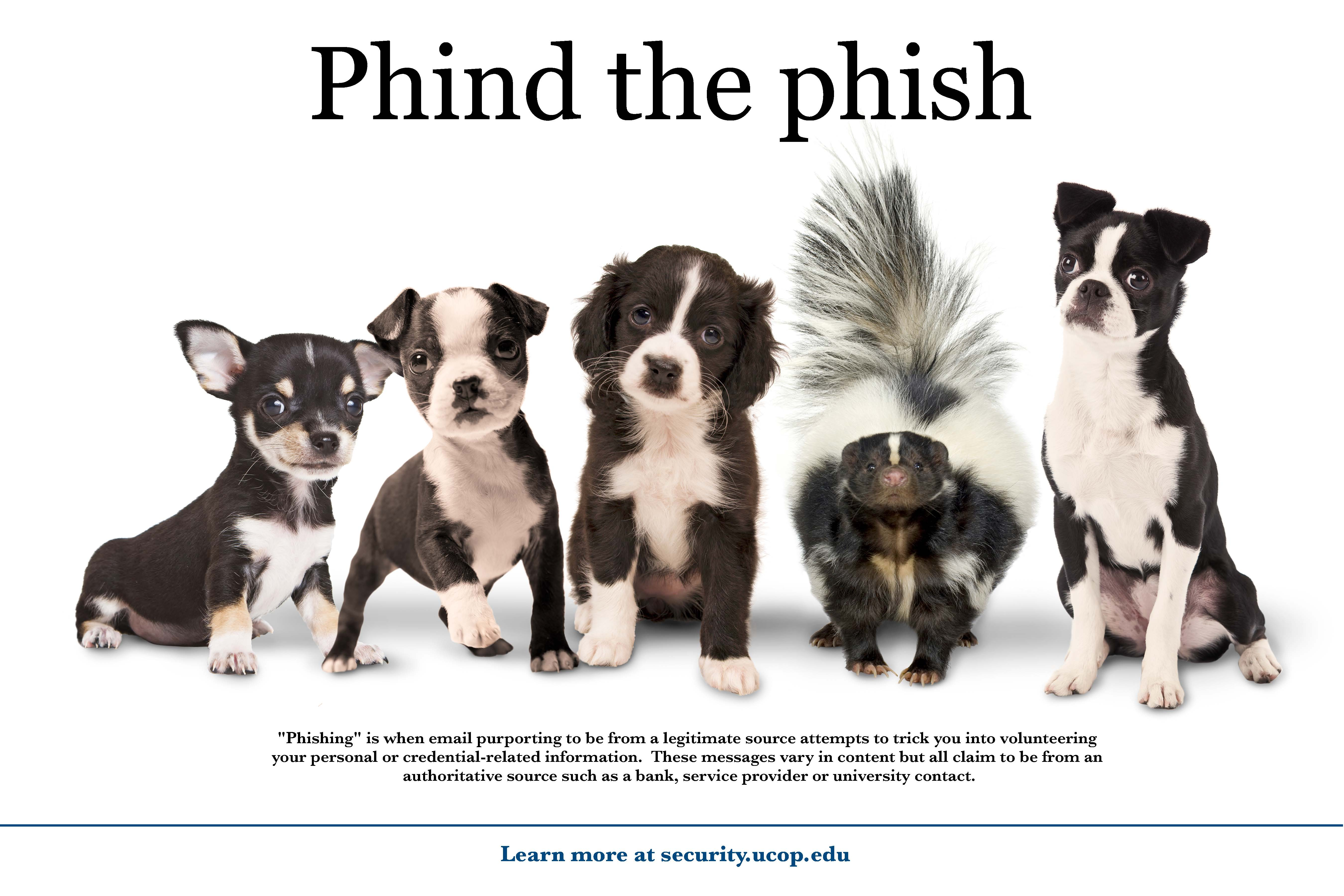 Flyer: Phind the phish. - Puppy Skunk