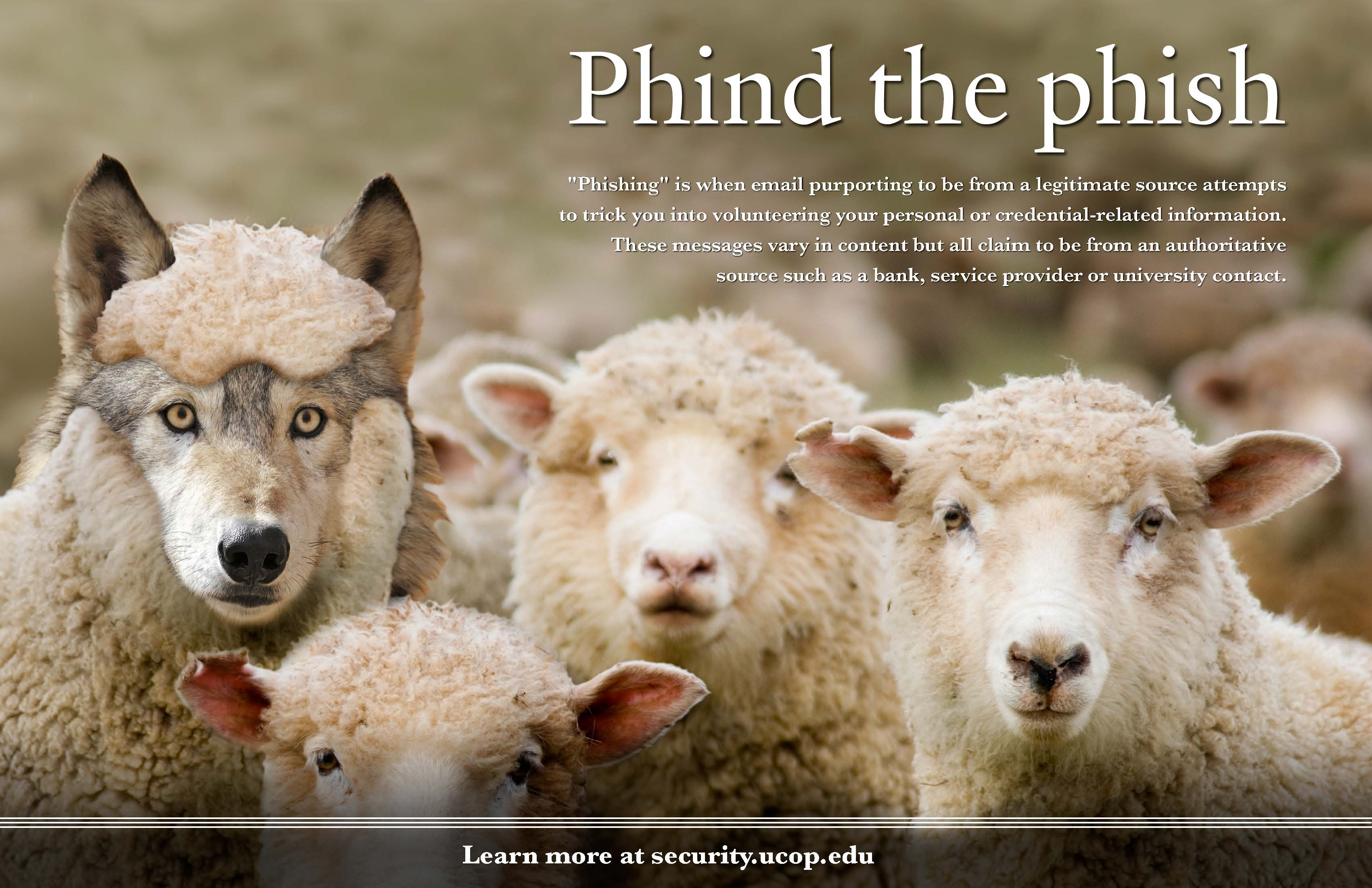 Phind the phish - Sheep-wolf